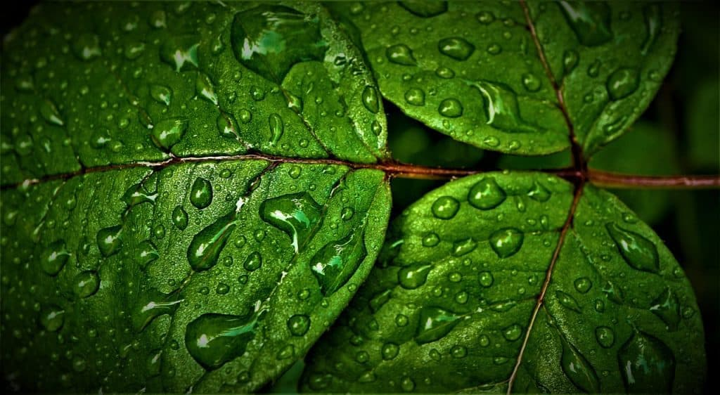 Leaves Producing Clean Oxygen to Breathe